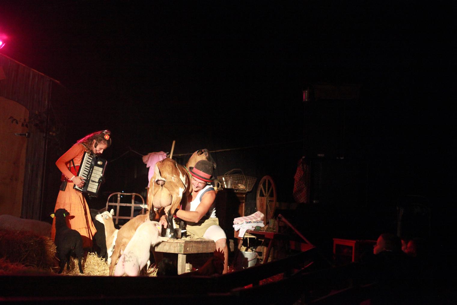 La traite de la chèvre Mme Chaussette pendant le spectacle de la comédie music'animale